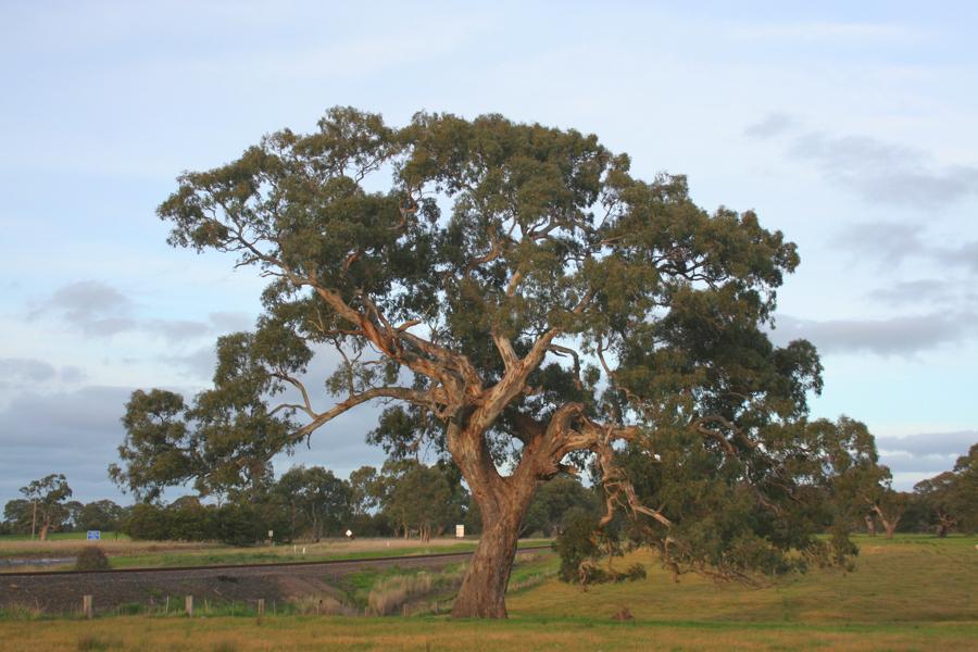 Auf die Perspektive kommt es an. Ich sehe einen wunderschönen, alten Baum, anderen ist er nicht gerade genug.